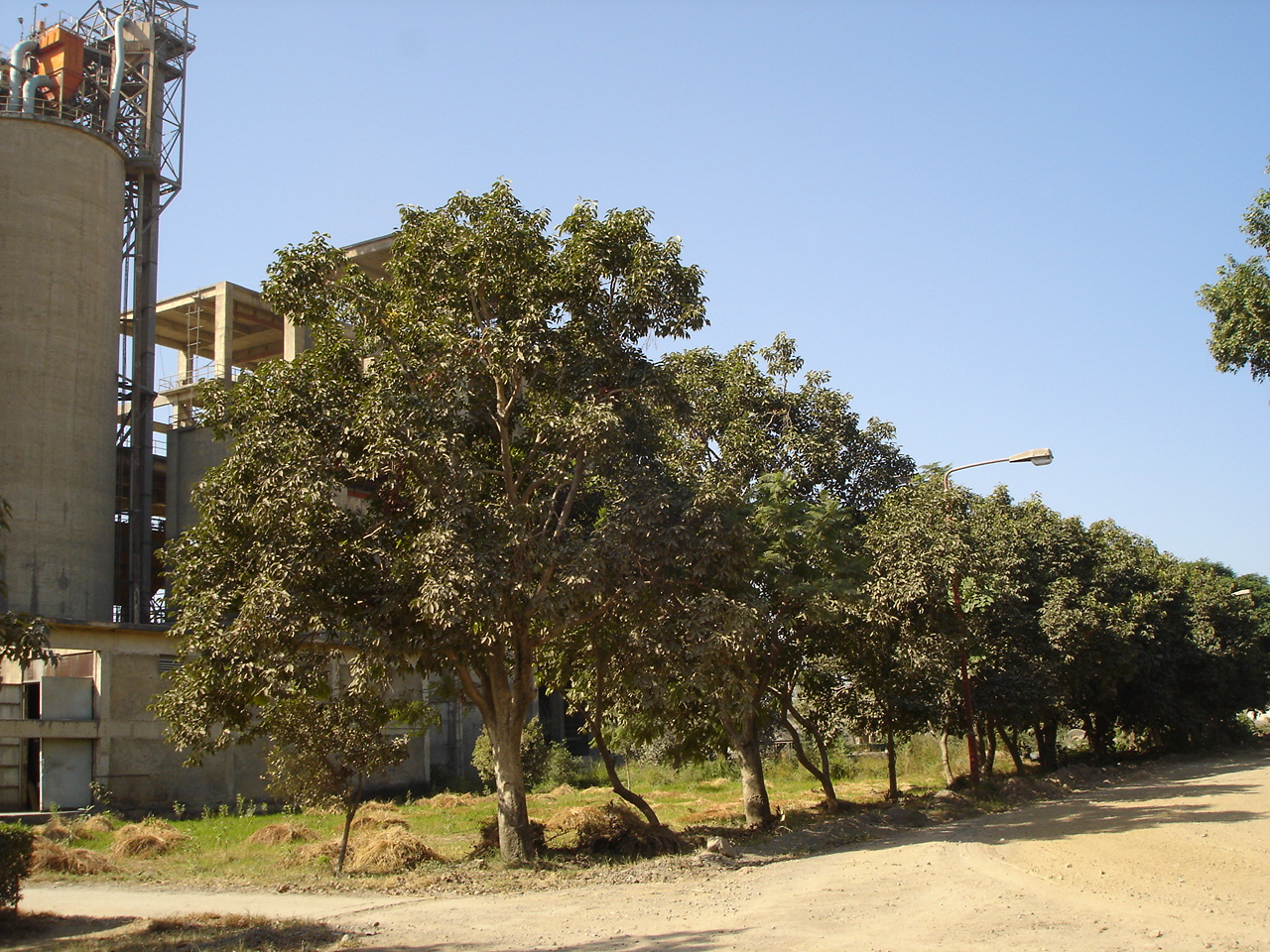 Argo-Tree (10)