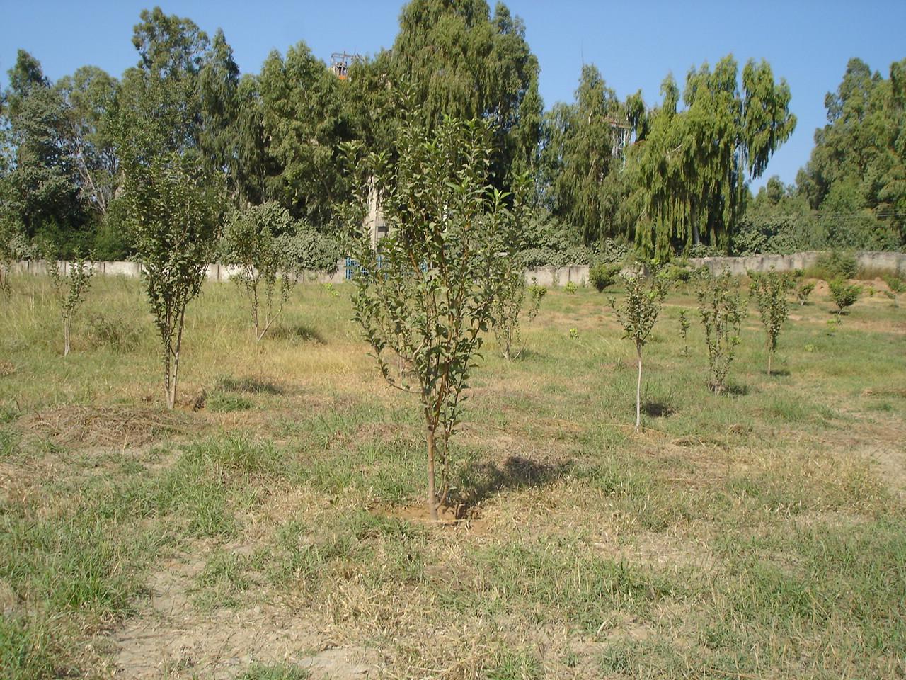 Argo-Tree (6)