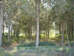 Argo-Tree (9)